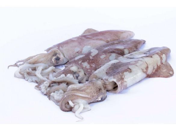 Calamaro Verace Decongelato