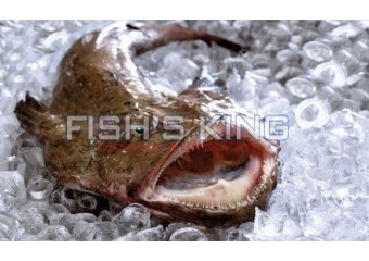 Pescatrice Fresca